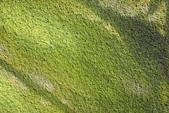 Część zieleni ściana Zdjęcia Royalty Free