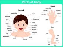 Części ciało ilustracja wektor