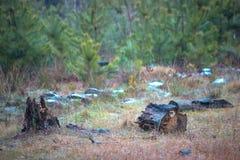 Części stary rżnięty drzewny kłamstwo na trawie obraz royalty free
