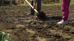 Częściowy widok mężczyzna i dziecko pracuje na warzywa polu w wczesnej wiośnie zdjęcie wideo