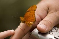 człowiek jest ręka motyla Zdjęcie Stock