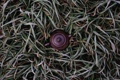 Czajnik w trawie Zdjęcia Royalty Free