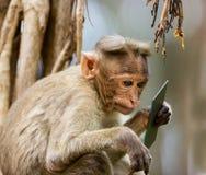 Czapeczka makak zdjęcia royalty free
