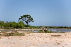 Czaple i różny ptak w Bundala parku narodowym Zdjęcie Stock