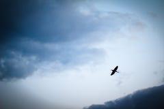 Czapli latanie na chmurnym niebie Zdjęcie Stock