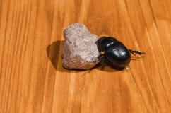 Czarna ściga na kamieniu zdjęcie royalty free