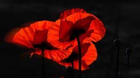 czarna czerwony Wewnętrzna praca Zdjęcia Royalty Free