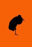 Czarna dźwigowa ptasia sylwetka z ścinek ścieżką, Zdjęcie Stock
