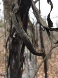 Czarna drzewna barkentyna, zakończenie Natura w jesieni Obrazy Royalty Free