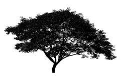 Czarna drzewna sylwetka ustawiający Tajlandia żadny 15 odizolowywający na białym tle obraz stock