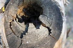 Czarna dziura w drzewnym bagażniku wejście bird& x27; s gniazdeczko jest starym drzewem, barkentyna zdjęcia stock