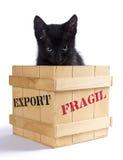 Czarna figlarka w drewnianym pudełku Zdjęcia Stock