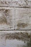 Czarna foremka na piwnicy ścianie Obrazy Stock
