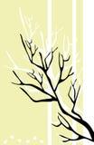 czarna gałęzi Obrazy Stock