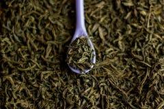 Czarna herbata w purpurowej łyżce na czarnej herbaty tle Obrazy Royalty Free