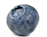 Czarna jagoda obrazy stock