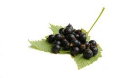 czarna jagoda rodzynku liści, obrazy stock