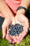 Czarna jagoda w ręce Zdjęcie Stock