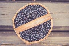 Czarna jagoda w Sweden Obrazy Royalty Free