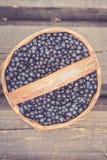 Czarna jagoda w Sweden Fotografia Royalty Free