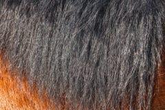 Czarna końska grzywa w słońcu w górę Może używać jako tekstura dla dekoracji obrazy stock