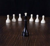 Czarna królowa w ostrości Zdjęcie Stock