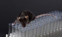 Czarna lab myszy sztuka na tubkach Zdjęcia Royalty Free