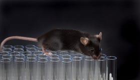Czarna lab myszy sztuka na tubkach Obrazy Royalty Free