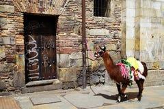 Czarna lama wiązał przed domem w Bogota obraz royalty free