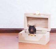 Czarna mysz w klatce piersiowej Zdjęcia Royalty Free