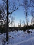 czarna niebieska footway zdjęcia scenerii białych tonował zimowe lasu zdjęcia stock