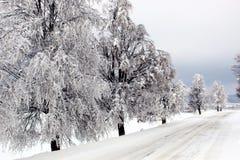 czarna niebieska footway zdjęcia scenerii białych tonował zimowe lasu Obraz Stock