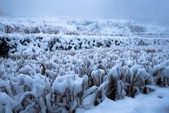 czarna niebieska footway zdjęcia scenerii białych tonował zimowe lasu Fotografia Royalty Free