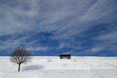 czarna niebieska footway zdjęcia scenerii białych tonował zimowe lasu Zdjęcie Stock