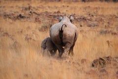 czarna nosorożec Zdjęcia Royalty Free