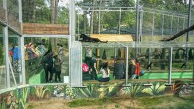 czarna pantera Zdjęcie Royalty Free