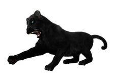 Czarna pantera na bielu Obrazy Stock