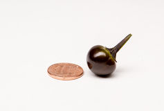 Czarna perła - Gorący pieprze Zdjęcie Stock