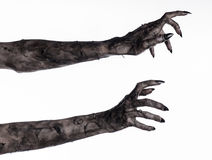 Czarna ręka śmierć chodzący nieboszczyk, żywego trupu temat, Halloween temat, żywy trup ręki, biały tło, mamuś ręki Fotografia Royalty Free