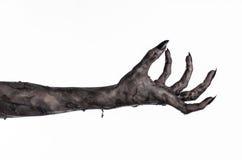 Czarna ręka śmierć chodzący nieboszczyk, żywego trupu temat, Halloween temat, żywy trup ręki, biały tło, mamuś ręki Obrazy Royalty Free