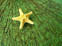 Czarna rozgwiazda i koral Zdjęcie Royalty Free