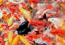 czarna ryb Obraz Royalty Free