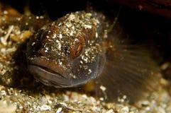czarna ryb Fotografia Stock