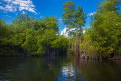 Czarna rzeka Zdjęcie Royalty Free