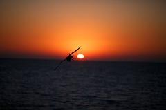 Czarna sylwetka latający ptaki na oceanie przy zmierzchem Zdjęcia Royalty Free