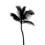 Czarna sylwetka odizolowywająca na bielu kokosowy drzewko palmowe Fotografia Stock