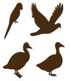 czarna ukształtować ptaka Fotografia Royalty Free