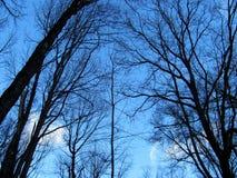 Czarne gałąź na nieba tle Zdjęcia Royalty Free