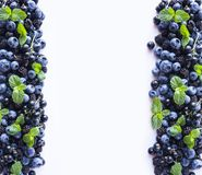 Czarne i Błękitne jagody na bielu Dojrzałe czarne jagody, czernicy z mennicą na białym tle Jagody przy granicą ima Obrazy Stock