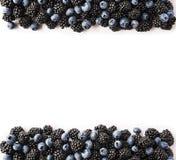 Czarne i Błękitne jagody na bielu Odgórny widok Dojrzałe czernicy i czarne jagody na białym tle Jagody przy granicą wizerunku dow Zdjęcie Royalty Free